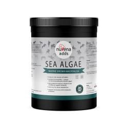 NuVena - Sea Algae 1500g (Ascophyllum nodosum) - Algi dla koni