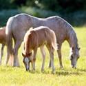 Nuba Musli - seria CARE dla koni hodowlanych